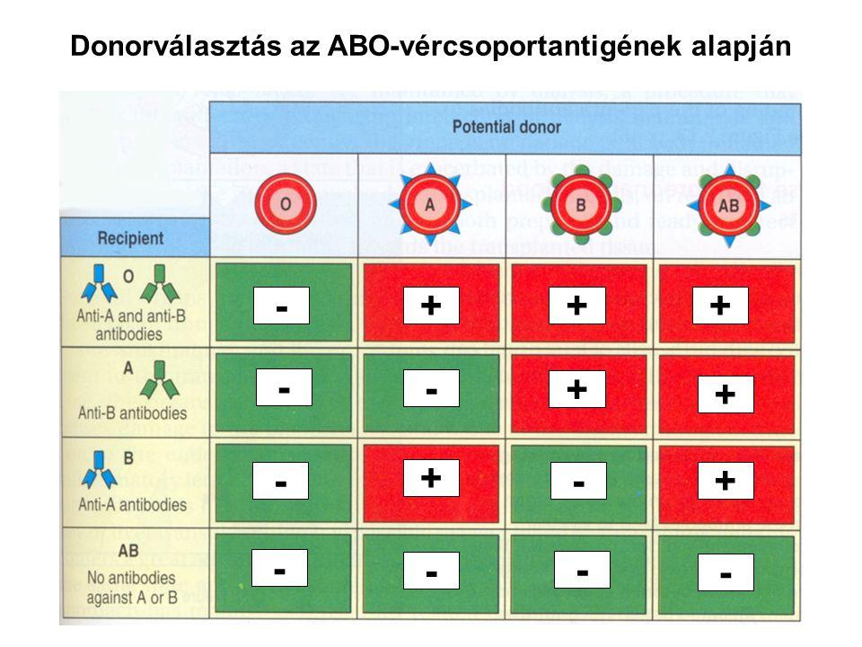 Donorválasztás az ABO-vércsoportantigének alapján - - - - - + - - - - ++ + + + +