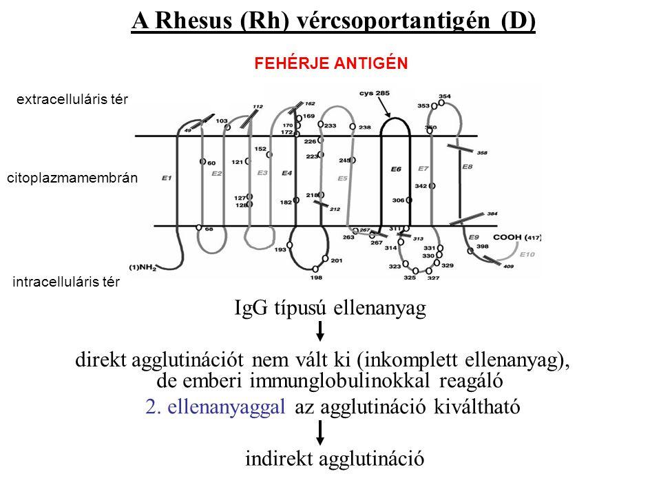 A Rhesus (Rh) vércsoportantigén (D) IgG típusú ellenanyag direkt agglutinációt nem vált ki (inkomplett ellenanyag), de emberi immunglobulinokkal reagá
