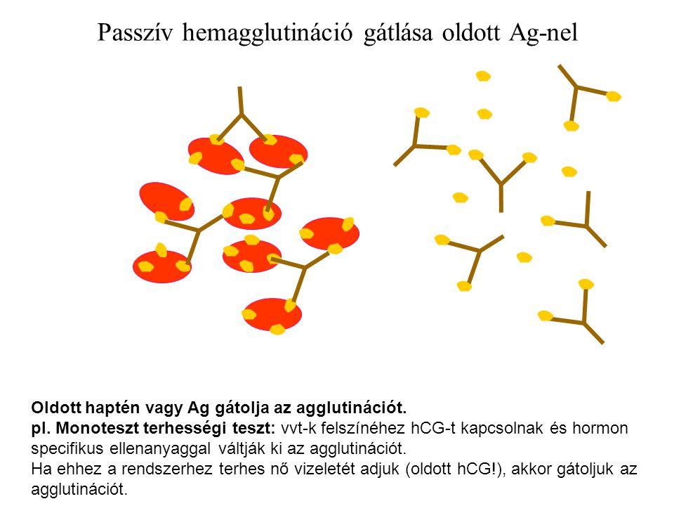 Passzív hemagglutináció gátlása oldott Ag-nel Oldott haptén vagy Ag gátolja az agglutinációt. pl. Monoteszt terhességi teszt: vvt-k felszínéhez hCG-t