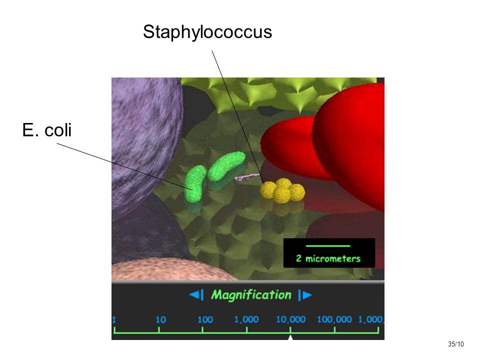 E. coli Staphylococcus 35/10