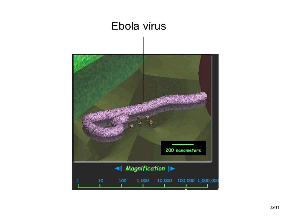 Ebola vírus 35/11