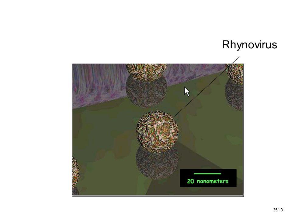 Rhynovirus 35/13
