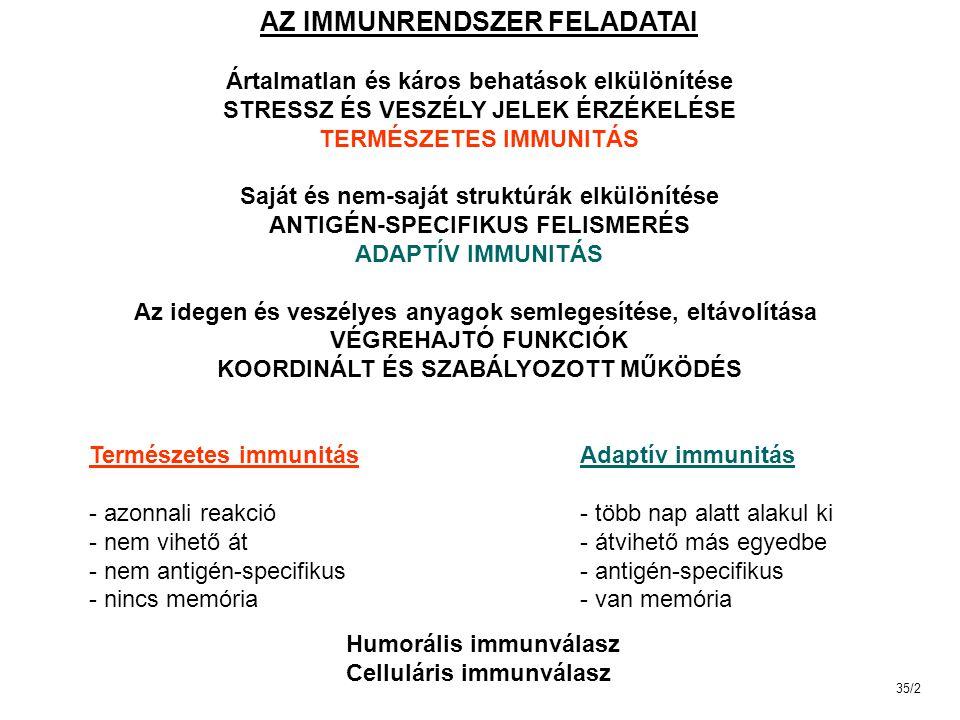"""NK SEJTEK (natural killer) eredet: csontvelői pluripotens előalakok limfoid progenitor keringésben 5-10% limfocitáknál nagyobbak citoplazmájukban számos granulum van nincs antigénkötő sejtmembrán receptoruk (""""null sejtek ) természetes immunitás fontos elemei 35/23"""