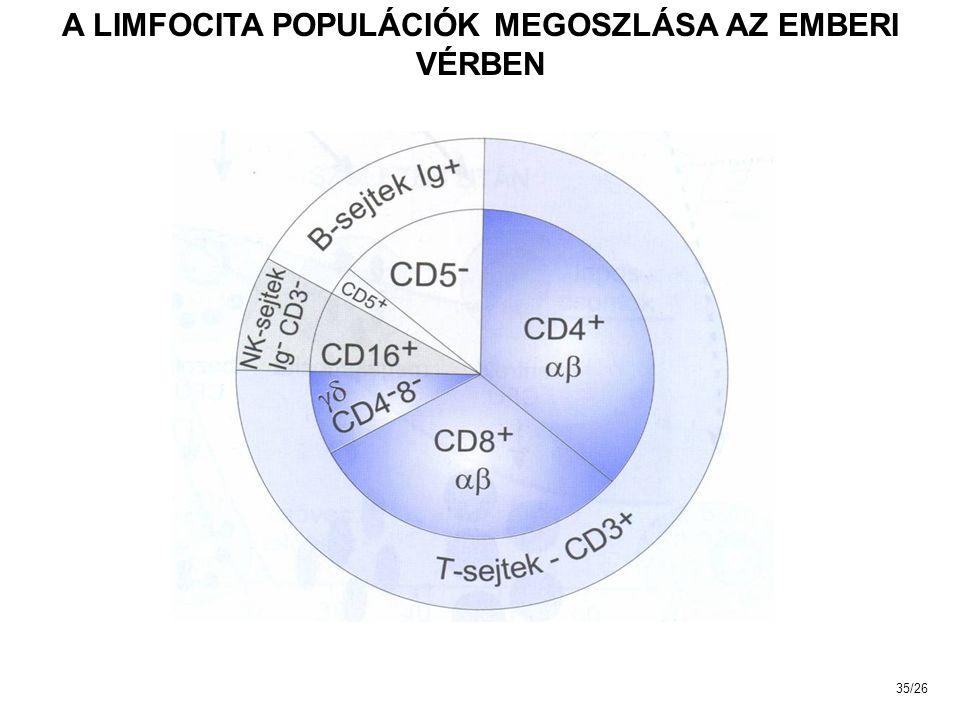 A LIMFOCITA POPULÁCIÓK MEGOSZLÁSA AZ EMBERI VÉRBEN 35/26
