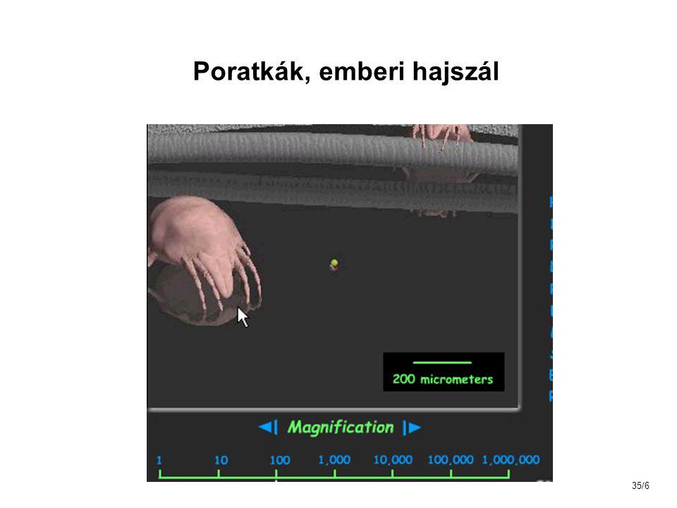 Poratkák, emberi hajszál 35/6