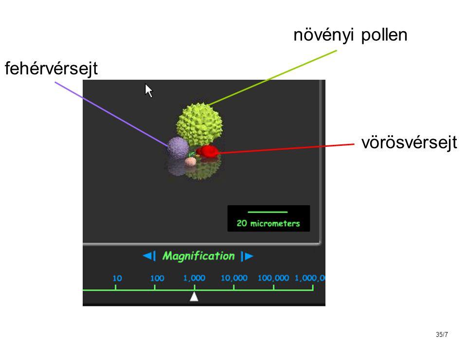 AZ IMMUNRENDSZER MŰKÖDÉSÉBEN RÉSZTVEVŐ SEJTEK Az emberi szervezetben cc 1.000.000.000.000 (10 12 ) fehérvérsejt van Pollen vörösvérsejt fehérvérsejtek 35/8
