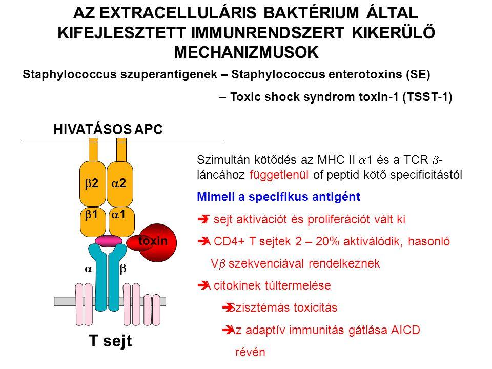 AZ EXTRACELLULÁRIS BAKTÉRIUM ÁLTAL KIFEJLESZTETT IMMUNRENDSZERT KIKERÜLŐ MECHANIZMUSOK Staphylococcus szuperantigenek – Staphylococcus enterotoxins (S