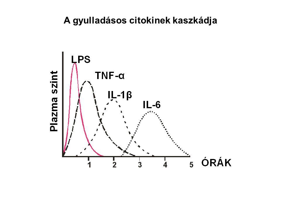 AZ EXTRACELLULÁRIS BAKTÉRIUMOK ELLENI IMMUNVÁLASZ FOLYAMATAI Neutralizáció Opsonizáció, FcR közvetített fagocitózis C3b-vel fedett baktériumok fagocitózisa Gyulladás Bakteriumok lízise Ellenanyag válasz Makrofág aktiváció Fagocitózis és intracelluláris baktérium ölés Gyulladás
