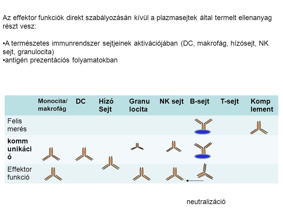 Monocita/ makrofág DCHízó Sejt Granu locita NK sejtB-sejtT-sejtKomp lement Felis merés komm unikáci ó Effektor funkció neutralizáció Az effektor funkciók direkt szabályozásán kívül a plazmasejtek által termelt ellenanyag részt vesz: A természetes immunrendszer sejtjeinek aktivációjában (DC, makrofág, hízósejt, NK sejt, granulocita) antigén prezentációs folyamatokban