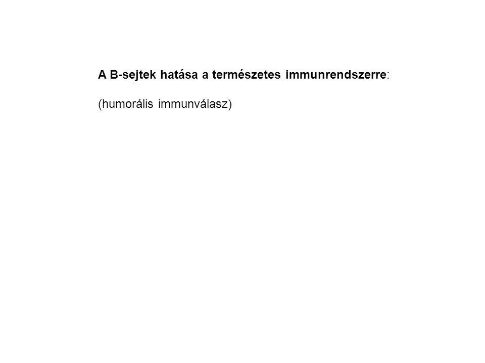 A B-sejtek hatása a természetes immunrendszerre: (humorális immunválasz)