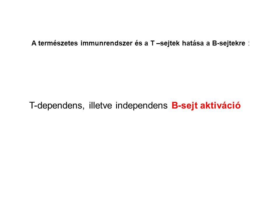 A természetes immunrendszer és a T –sejtek hatása a B-sejtekre : T-dependens, illetve independens B-sejt aktiváció