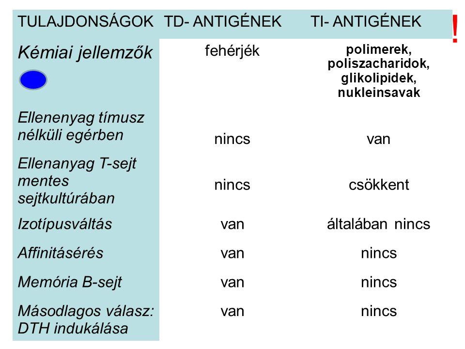 TULAJDONSÁGOKTD- ANTIGÉNEKTI- ANTIGÉNEK Kémiai jellemzők fehérjék polimerek, poliszacharidok, glikolipidek, nukleinsavak Ellenenyag tímusz nélküli egérben nincsvan Ellenanyag T-sejt mentes sejtkultúrában nincscsökkent Izotípusváltásvanáltalában nincs Affinitásérésvannincs Memória B-sejtvannincs Másodlagos válasz: DTH indukálása vannincs !