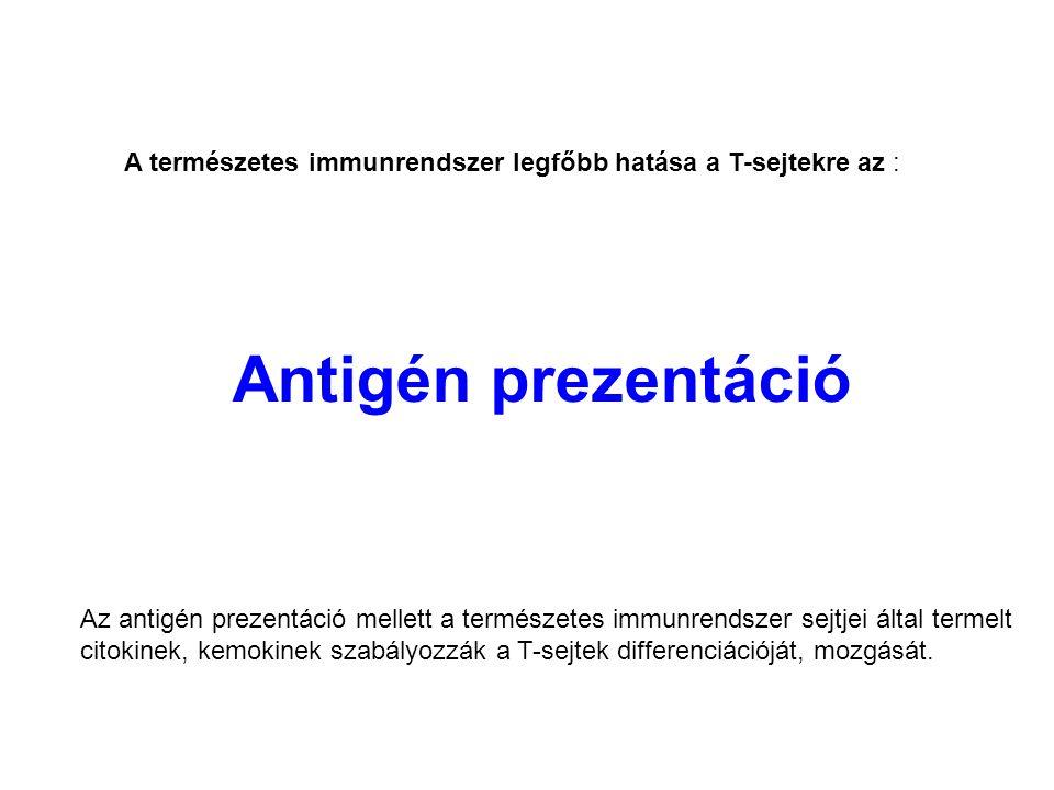 Antigén prezentáció A természetes immunrendszer legfőbb hatása a T-sejtekre az : Az antigén prezentáció mellett a természetes immunrendszer sejtjei által termelt citokinek, kemokinek szabályozzák a T-sejtek differenciációját, mozgását.