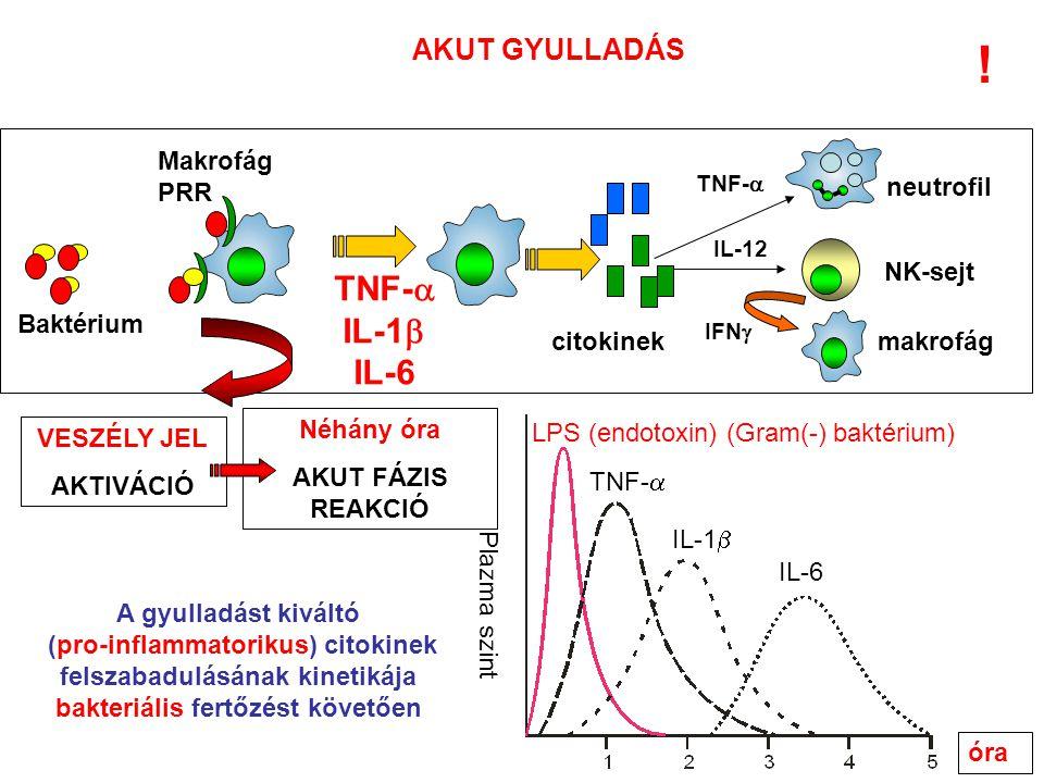 NK-sejt IL-12 makrofág IFN  citokinek neutrofil TNF-  AKUT GYULLADÁS óra Plazma szint LPS (endotoxin) (Gram(-) baktérium) TNF-  IL-1  IL-6 A gyulladást kiváltó (pro-inflammatorikus) citokinek felszabadulásának kinetikája bakteriális fertőzést követően TNF-  IL-1  IL-6 Néhány óra AKUT FÁZIS REAKCIÓ Baktérium VESZÉLY JEL AKTIVÁCIÓ Makrofág PRR !