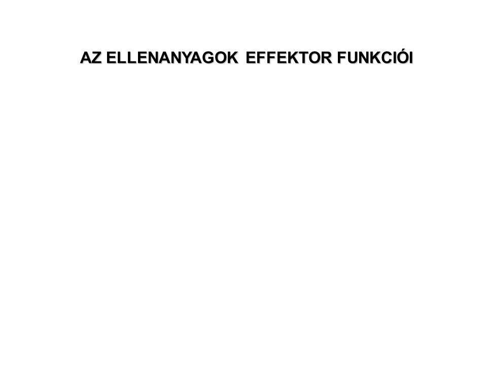 Ellenanyag közvetített effektor funkciók: 1.Neutralizáció (variábilis domén) Fc rész: 2.