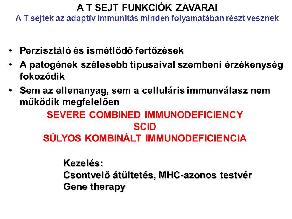 Perzisztáló és ismétlődő fertőzések A patogének szélesebb típusaival szembeni érzékenység fokozódik Sem az ellenanyag, sem a celluláris immunválasz nem működik megfelelően A T SEJT FUNKCIÓK ZAVARAI A T sejtek az adaptív immunitás minden folyamatában részt vesznek SEVERE COMBINED IMMUNODEFICIENCY SCID SÚLYOS KOMBINÁLT IMMUNODEFICIENCIA Kezelés: Csontvelő átültetés, MHC-azonos testvér Gene therapy