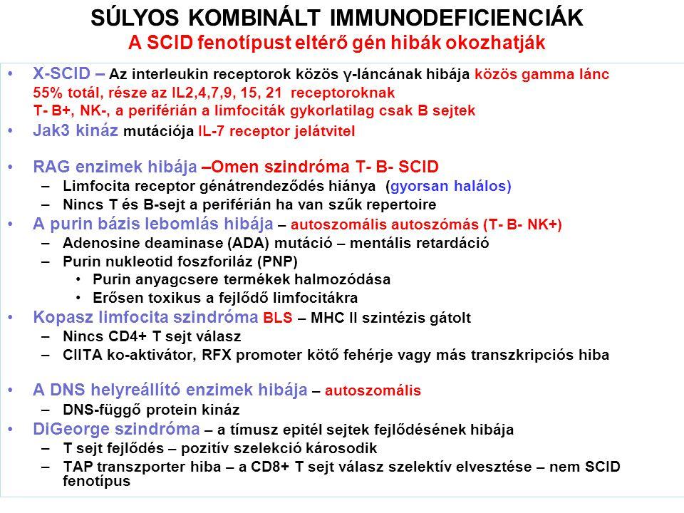 X-SCID – Az interleukin receptorok közös γ-láncának hibája közös gamma lánc 55% totál, része az IL2,4,7,9, 15, 21 receptoroknak T- B+, NK-, a periférián a limfociták gykorlatilag csak B sejtek Jak3 kináz mutációja IL-7 receptor jelátvitel RAG enzimek hibája –Omen szindróma T- B- SCID –Limfocita receptor génátrendeződés hiánya (gyorsan halálos) –Nincs T és B-sejt a periférián ha van szűk repertoire A purin bázis lebomlás hibája – autoszomális autoszómás (T- B- NK+) –Adenosine deaminase (ADA) mutáció – mentális retardáció –Purin nukleotid foszforiláz (PNP) Purin anyagcsere termékek halmozódása Erősen toxikus a fejlődő limfocitákra Kopasz limfocita szindróma BLS – MHC II szintézis gátolt –Nincs CD4+ T sejt válasz –CIITA ko-aktivátor, RFX promoter kötő fehérje vagy más transzkripciós hiba A DNS helyreállító enzimek hibája – autoszomális –DNS-függő protein kináz DiGeorge szindróma – a tímusz epitél sejtek fejlődésének hibája –T sejt fejlődés – pozitív szelekció károsodik –TAP transzporter hiba – a CD8+ T sejt válasz szelektív elvesztése – nem SCID fenotípus SÚLYOS KOMBINÁLT IMMUNODEFICIENCIÁK A SCID fenotípust eltérő gén hibák okozhatják