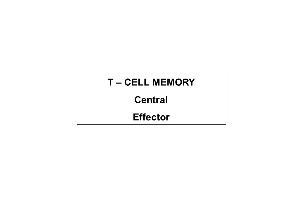 T – CELL MEMORY Central Effector