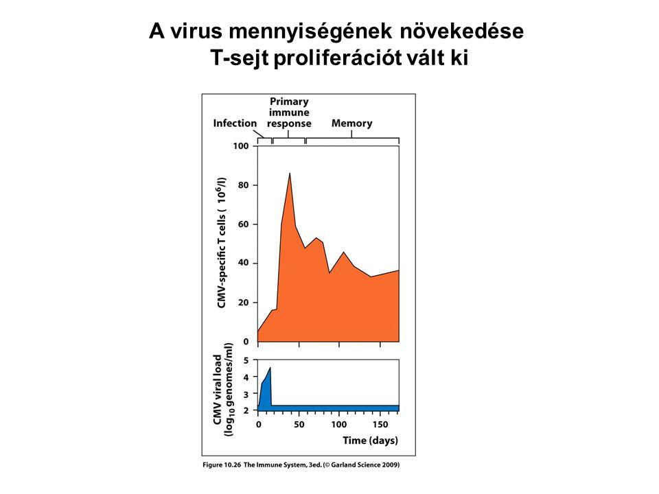 A virus mennyiségének növekedése T-sejt proliferációt vált ki