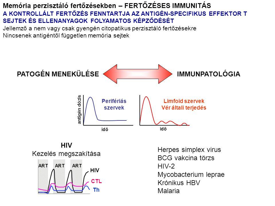 HIV CTL Th ART IMMUNPATOLÓGIA PATOGÉN MENEKÜLÉSE HIV Kezelés megszakítása Herpes simplex virus BCG vakcina törzs HIV-2 Mycobacterium leprae Krónikus HBV Malaria Memória perzisztáló fertőzésekben – FERTŐZÉSES IMMUNITÁS A KONTROLLÁLT FERTŐZÉS FENNTARTJA AZ ANTIGÉN-SPECIFIKUS EFFEKTOR T SEJTEK ÉS ELLENANYAGOK FOLYAMATOS KÉPZŐDÉSÉT Jellemző a nem vagy csak gyengén citopatikus perzisztáló fertőzésekre Nincsenek antigéntől független memória sejtek Perifériás szervek Limfoid szervek Vér általi terjedés antigén dózis idő