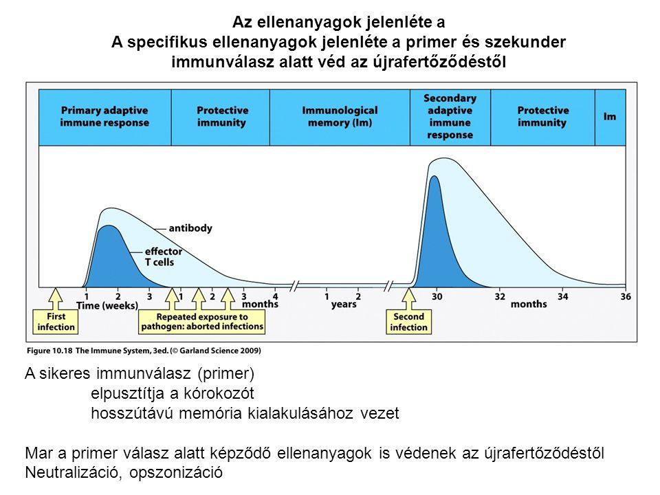 Az ellenanyagok jelenléte a A specifikus ellenanyagok jelenléte a primer és szekunder immunválasz alatt véd az újrafertőződéstől A sikeres immunválasz (primer) elpusztítja a kórokozót hosszútávú memória kialakulásához vezet Mar a primer válasz alatt képződő ellenanyagok is védenek az újrafertőződéstől Neutralizáció, opszonizáció