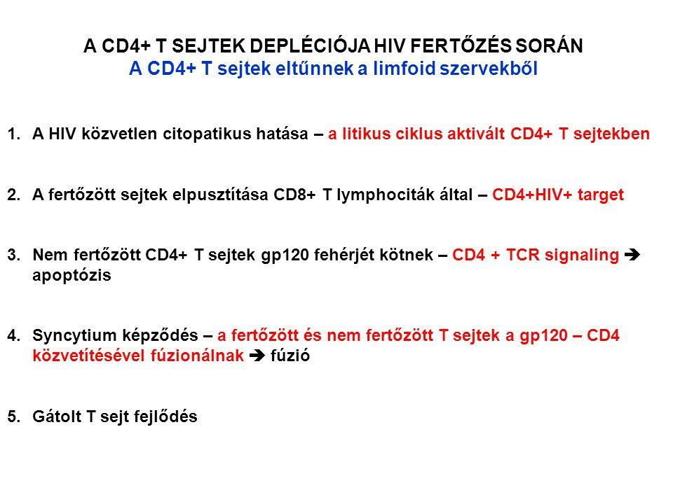 A CD4+ T SEJTEK DEPLÉCIÓJA HIV FERTŐZÉS SORÁN A CD4+ T sejtek eltűnnek a limfoid szervekből 1.A HIV közvetlen citopatikus hatása – a litikus ciklus aktivált CD4+ T sejtekben 2.A fertőzött sejtek elpusztítása CD8+ T lymphociták által – CD4+HIV+ target 3.Nem fertőzött CD4+ T sejtek gp120 fehérjét kötnek – CD4 + TCR signaling  apoptózis 4.Syncytium képződés – a fertőzött és nem fertőzött T sejtek a gp120 – CD4 közvetítésével fúzionálnak  fúzió 5.Gátolt T sejt fejlődés