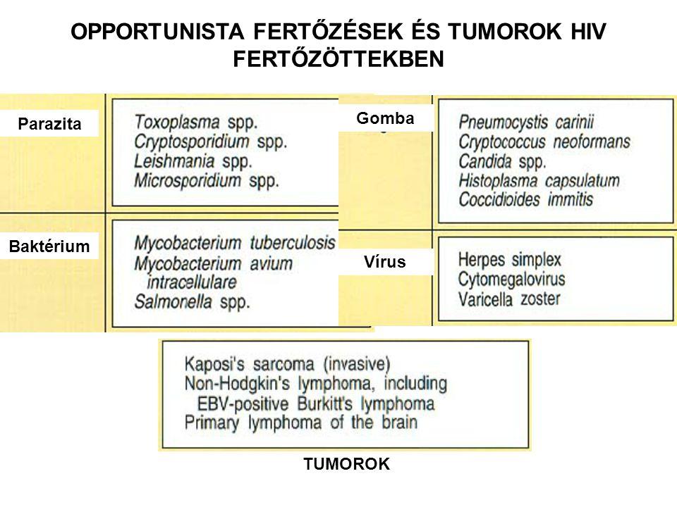 OPPORTUNISTA FERTŐZÉSEK ÉS TUMOROK HIV FERTŐZÖTTEKBEN Parazita Baktérium Gomba Vírus TUMOROK