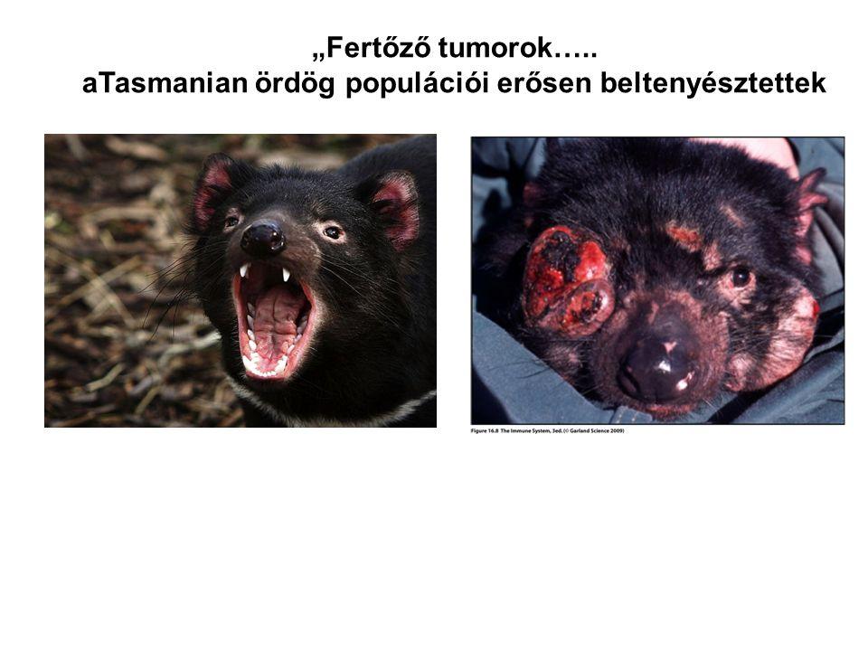 """""""Fertőző tumorok….. aTasmanian ördög populációi erősen beltenyésztettek"""