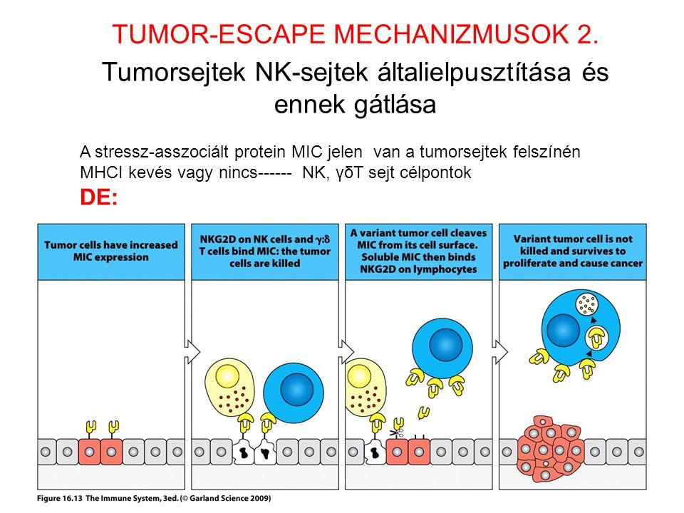 Tumorsejtek NK-sejtek általielpusztítása és ennek gátlása TUMOR-ESCAPE MECHANIZMUSOK 2. A stressz-asszociált protein MIC jelen van a tumorsejtek felsz