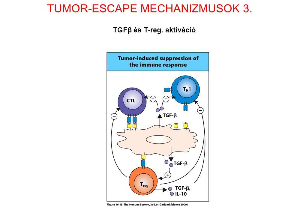 TUMOR-ESCAPE MECHANIZMUSOK 3. TGFβ és T-reg. aktiváció