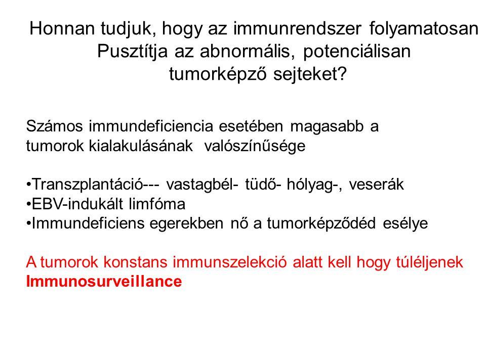 Tumorok MHC-függő kilökődése Az Immunosurveillence mechanoizmusa Azonos a virusellenes immunválasz mechanizmusával