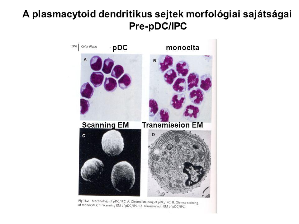 1.Az NK sejtek kialakulása – nincs TCR 2.A γδ és az αβ TCR kialakulása 3.