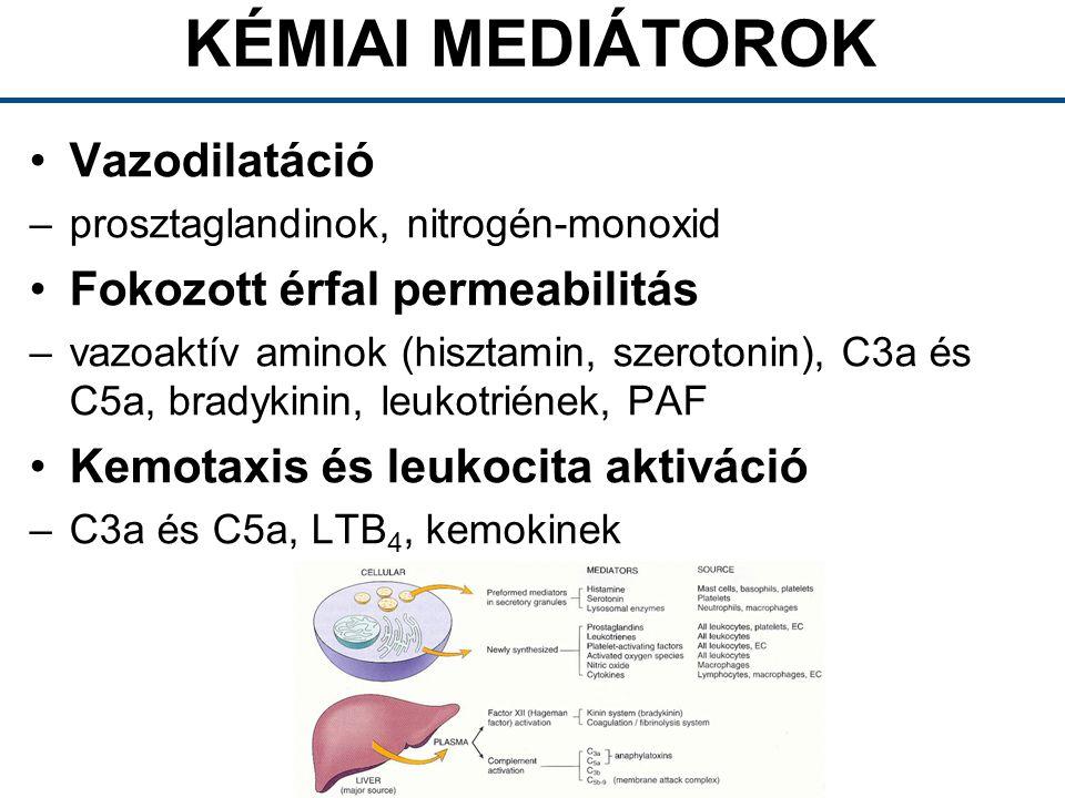 KÉMIAI MEDIÁTOROK Vazodilatáció –prosztaglandinok, nitrogén-monoxid Fokozott érfal permeabilitás –vazoaktív aminok (hisztamin, szerotonin), C3a és C5a