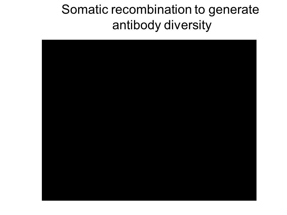 Somatic recombination to generate antibody diversity