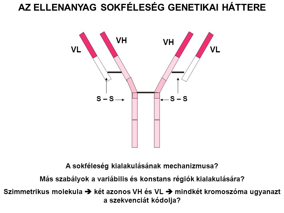 How does somatic gene rearrangement (recombination) work.