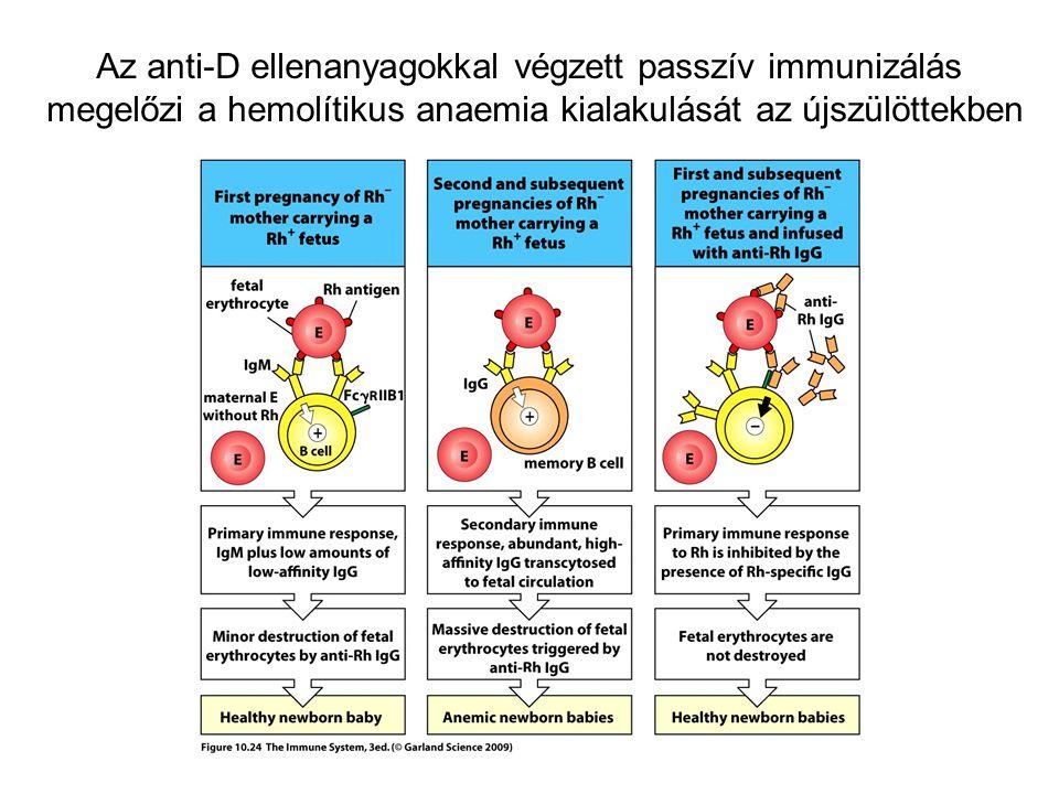 Az anti-D ellenanyagokkal végzett passzív immunizálás megelőzi a hemolítikus anaemia kialakulását az újszülöttekben
