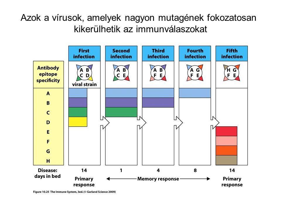 Azok a vírusok, amelyek nagyon mutagének fokozatosan kikerülhetik az immunválaszokat