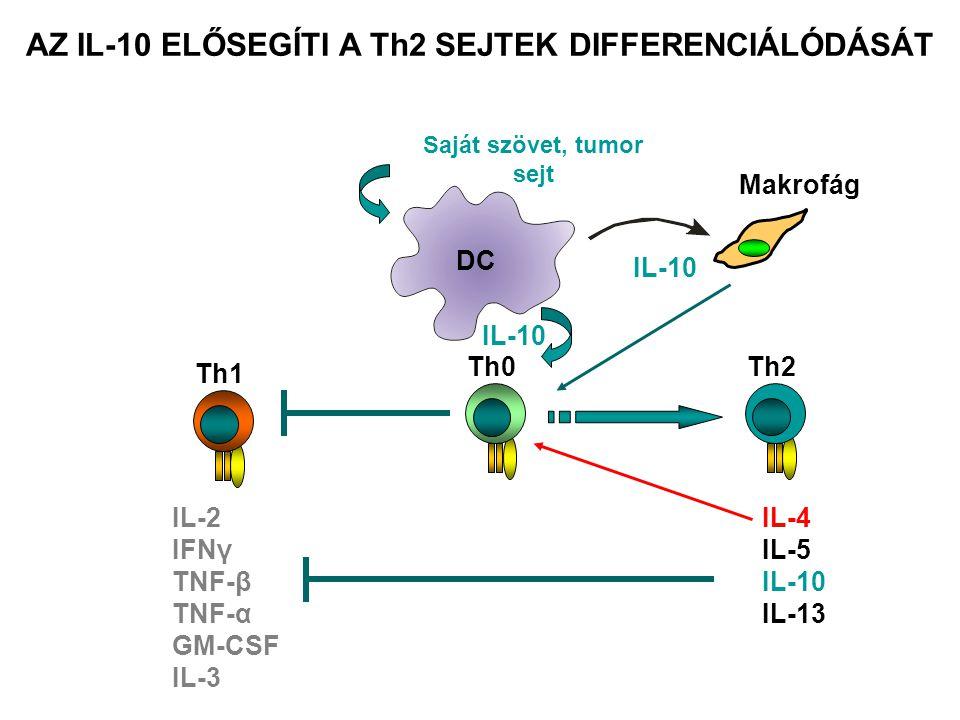 AZ IL-10 ELŐSEGÍTI A Th2 SEJTEK DIFFERENCIÁLÓDÁSÁT Th0 IL-10 Th1 IL-2 IFNγ TNF-β TNF-α GM-CSF IL-3 DC Saját szövet, tumor sejt IL-10 Makrofág Th2 IL-4
