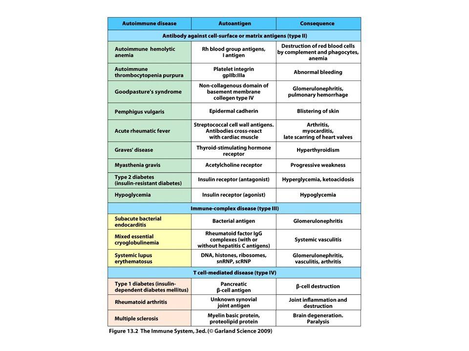 Inzulin β-sejtδ-sejt α- sejt β-sejtδ-sejt Hasnyálmirigy sziget AZ AUTOREAKTIVITÁS MECHANIZMUSA INZULIN FÜGGŐ CUKORBETEGSÉGBEN IV típusú hiperszenzitivitás AZ AUTOREAKTÍV CITOTOXIKUS T SEJTEK ELPUSZTÍTJÁK AZ INZULIN TERMELŐ β-SEJTEKET glukagon Szomatosztatin 10 8 sejt
