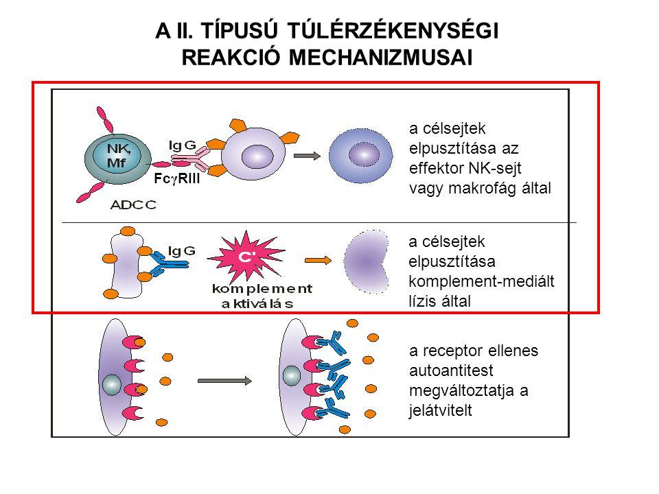 Ideg ingerület Internalizáció Nincs izom összehúzódás MYASTHENIA GRAVIS A BLOKKOLÓ AUTO - ANTITESTEK GÁTOLJÁK A KÉT SEJT EGYÜTMŰKÖDÉSÉT NEURO-MUSZKULÁRIS KAPCSOLAT Izom Acetilkolin receptor