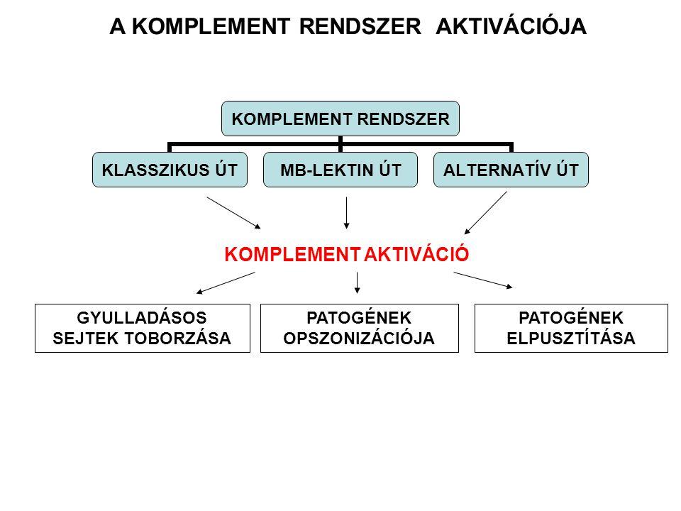 Antigén-ellenanyag komplex MannosePatogén felszíne C1q, C1r, C1s Serin protease C4, C2 MBL MASP-1/MASP-2 Serin protease C4, C2 C3 B, D COMPLEMENT SYSTEM CLASSICAL PATHWAYMB-LECTIN PATHWAYALTERNATIVE PATHWAY C3 CONVERTASE C4a* C3a, C5a Gyulladásos peptid mediátorok Fagocita sejtek toborzása C3b Opszonizáció Kötődés a fagociták komplement receptorához (CR) Immunkomplexek eltávolítása Terminal C5b – C9 MAC Patogén/sejt lízise