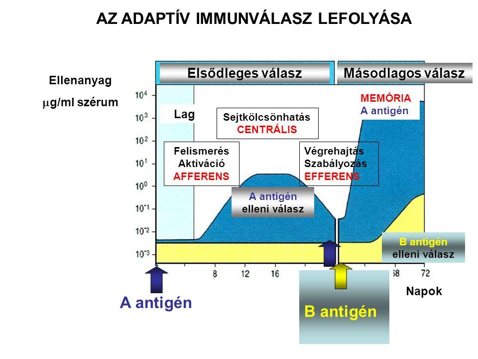 Napok Ellenanyag  g/ml szérum A antigén A antigén elleni válasz Sejtkölcsönhatás CENTRÁLIS Végrehajtás Szabályozás EFFERENS Elsődleges válasz Felismerés Aktiváció AFFERENS Lag Másodlagos válasz MEMÓRIA A antigén AZ ADAPTÍV IMMUNVÁLASZ LEFOLYÁSA B antigén B antigén elleni válasz