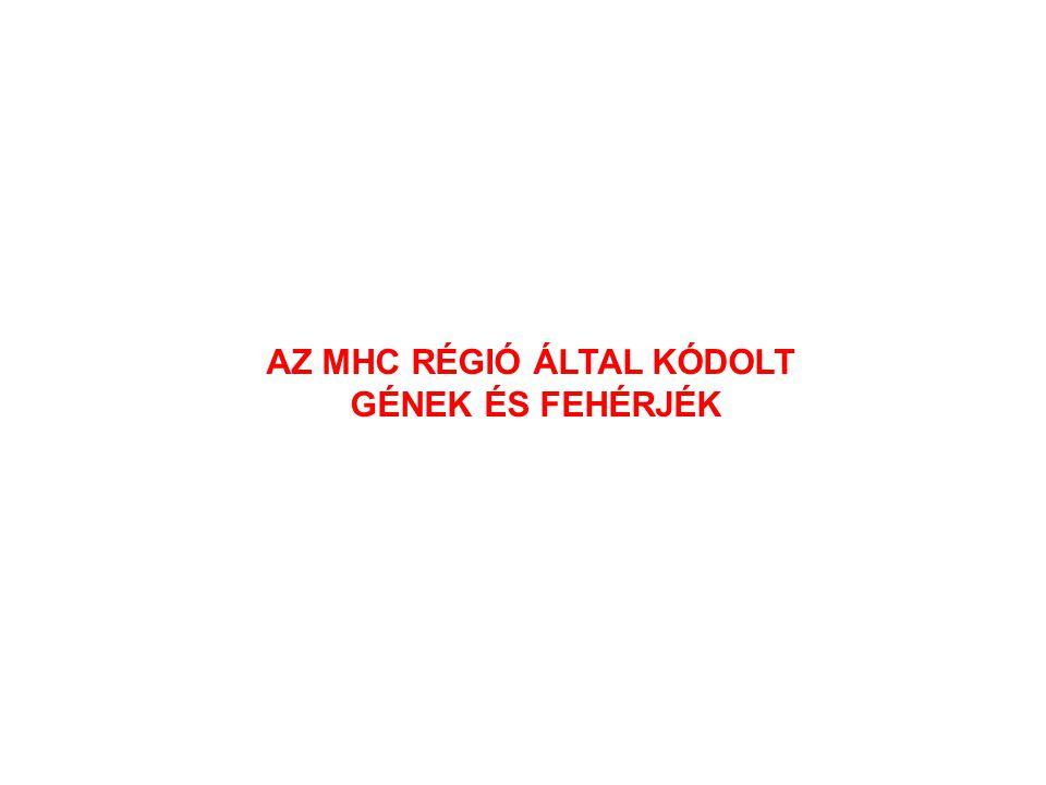 AZ MHC RÉGIÓ ÁLTAL KÓDOLT GÉNEK ÉS FEHÉRJÉK