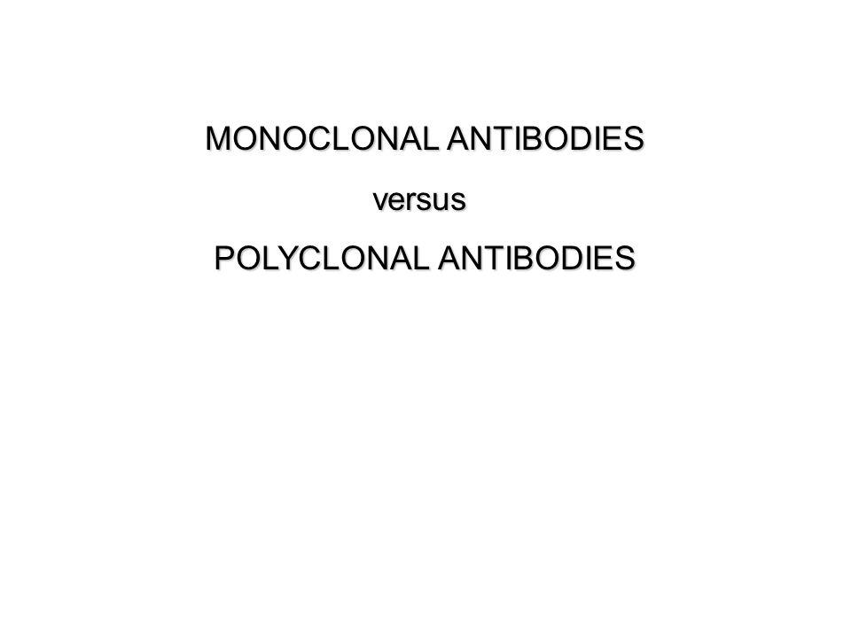 MONOCLONAL ANTIBODIES versus POLYCLONAL ANTIBODIES