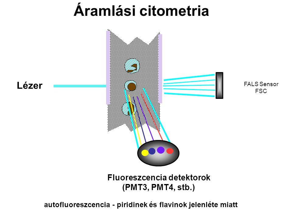 Lézer FALS Sensor FSC Fluoreszcencia detektorok (PMT3, PMT4, stb.) autofluoreszcencia - piridinek és flavinok jelenléte miatt Áramlási citometria