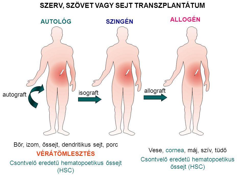 AUTOLÓG SZERV, SZÖVET VAGY SEJT TRANSZPLANTÁTUM Bőr, izom, őssejt, dendritikus sejt, porc VÉRÁTÖMLESZTÉS Csontvelő eredetű hematopoetikus őssejt (HSC)