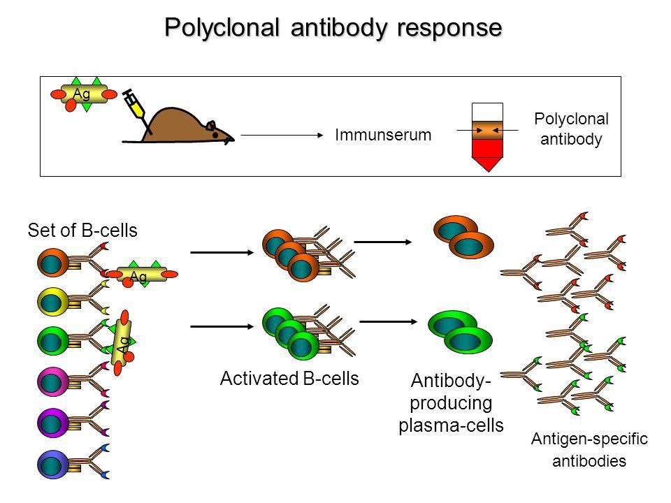 Többsejtű paraziták ellen kialakuló immunreakciók Shistosoma mansoni (bilharzia)
