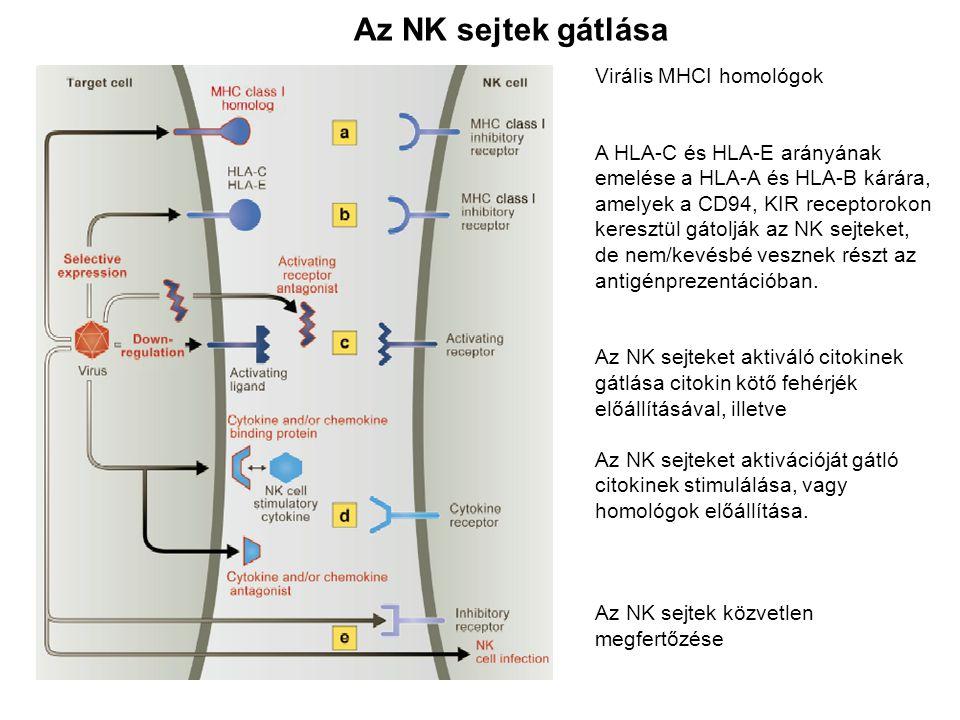 Virális MHCI homológok A HLA-C és HLA-E arányának emelése a HLA-A és HLA-B kárára, amelyek a CD94, KIR receptorokon keresztül gátolják az NK sejteket,