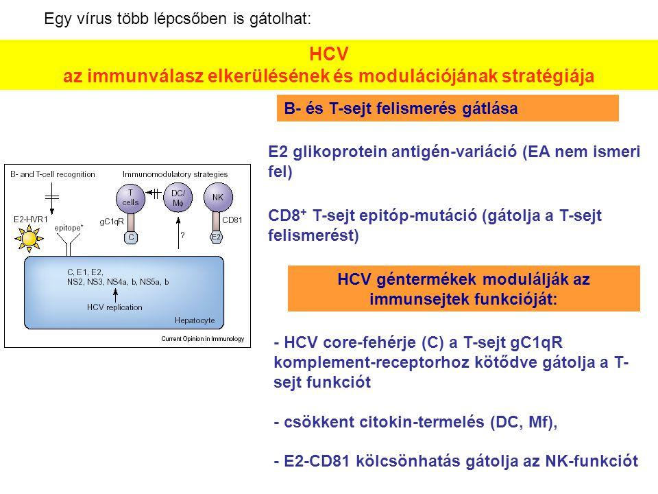 HCV az immunválasz elkerülésének és modulációjának stratégiája E2 glikoprotein antigén-variáció (EA nem ismeri fel) CD8 + T-sejt epitóp-mutáció (gátol