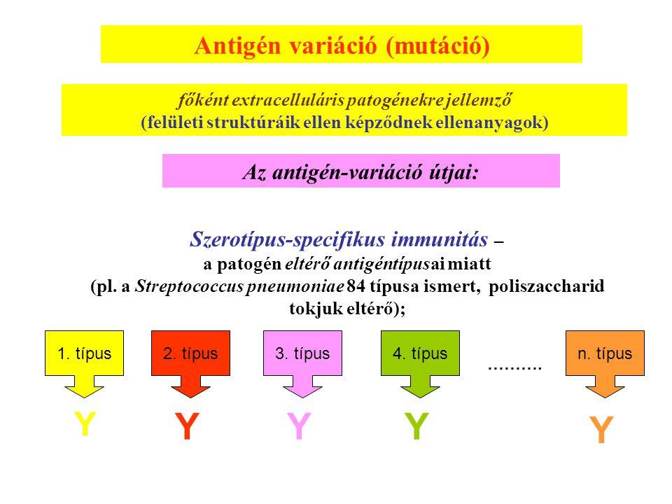 Antigén variáció (mutáció) főként extracelluláris patogénekre jellemző (felületi struktúráik ellen képződnek ellenanyagok) Az antigén-variáció útjai: